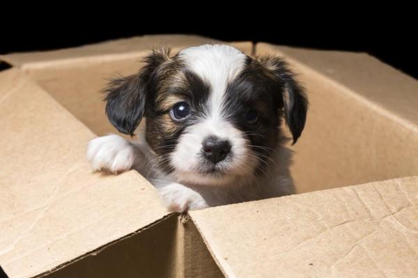 cachorrinho-2